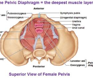 Vaginismus, Genito-Pelvic Pain Disorder