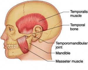 Mandibular Joint